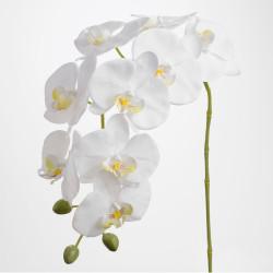 Tige d'orchidée Phalae Eden...