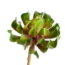 Cactus Aeonium artificiel15 cm