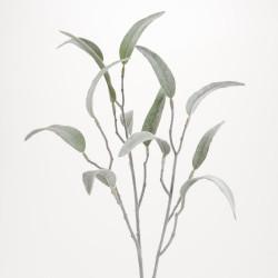 Branche d'eucalyptus...