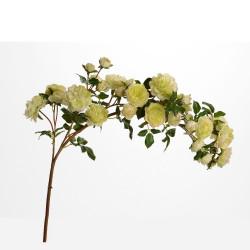 Branche de rose Multiflora...